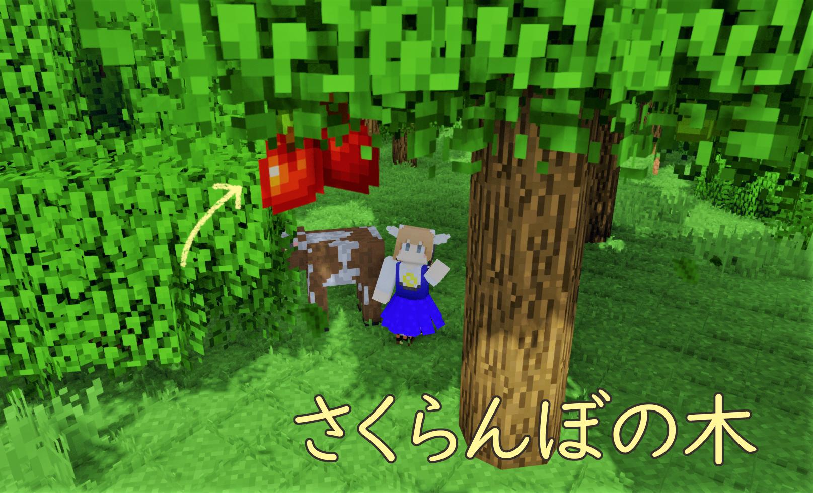 果樹 さくらんぼの木.png
